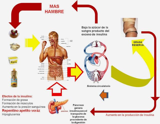 ciclo del hambre