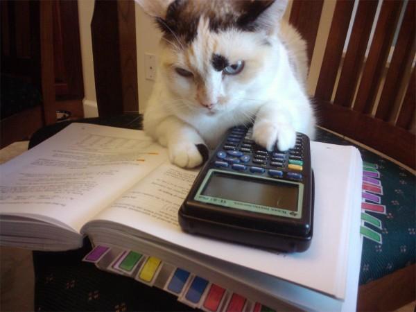 cat_with_calculator-600x450